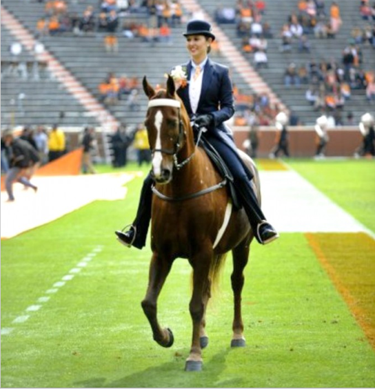 """2012 - UNIVERSITY OF TENNESSEE Homecoming - Kimbrell Hines Up On """"A Daring Affair"""" - Taking The Place Of 'Big Lick' World Grand Champion Walk Time Charlie"""