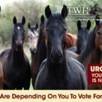 "POLL ON ""HR 1518/S.1406"",  PREVENT ALL SORING TACTICS Act – VOTE ""YES"" OR ""NO"" ON THE FOLLOWING QUESTION:                              ""I am FOR passage of HR 1518/S. 1406 – ""Prevent All Soring Tactics"" Act to remove the pads and chains in order to end the public perception of soring and abuse presently associated with the Tennessee Walking Horse Breed, to eliminate HIOs and to increase penalties for soring""."