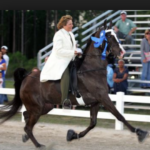 "PANAMA CITY BEACH-BAY COUNTY TOURISM BOARD GIVES $25,000.00 TO 2016 ""GULF COAST CHARITY TRAINERS SHOW"" UPON REQUEST OF SHOW FOUNDER MS. MARTHA (SISTER) BLACKMON-MILLIGAN WHO PRESENTLY FACES ALLEGED HORSE PROTECTION ACT VIOLATIONS (ANIMAL CRUELTY) AT 2013 GULF COAST CHARITY TRAINERS SHOW"