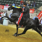 "2014 MISSISSIPPI CHARITY HORSE SHOW CHAMPION 'GEN'S BLACK MAVERICK'  ""SORED"" TO PRODUCE MONEY FOR CHILDRENS HOSPITAL – OLE MISS HAS A DECISON TO MAKE"