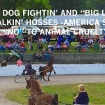 """WHAT'S WRONG WITH THE """"BIG LICK""""  """"WAY OF LIFE"""" THAT CONDONES AND CELEBRATES ANIMAL CRUELTY AS ENTERTAINMENT, RECREATION, AND """"SPORT"""" – IS THIS WHO YOU ARE SENATOR LAMAR ALEXANDER???"""