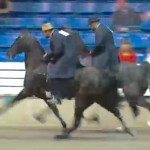 PUBLIC BOYCOTTS  NIGHT TWO OF WALKING HORSE TRAINERS BOYZ SHOW (INLAND VERSION) AT CALSONIC ARENA -TENNESSEE WALKING HORSE NATIONAL CELEBRATION