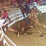 "News Flash!!! – ""Big Lick"" Tennesssee Walking Horse Throws His Rider In The Show Ring At ""Big Lick"" North Carolina Championship Horse Show at Western NC Agricultural Center In Asheville, North Carolina"