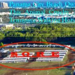 "Panama City Beach Serves Notice To ""Big Lick"" Horse Show Organizer Ms. Martha Blackmon Milligan – Free Ride Is Over And We're Tearing Down The Fence And Gazebo Before 2018!!!!"