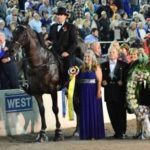 2017 World Grand Champion Gen's Black Maverick Allegedly SORED By Trainer BOYZ Mr. Bill Callaway At 2016 Tennessee Walking Horse Super Bowl (Celebration)
